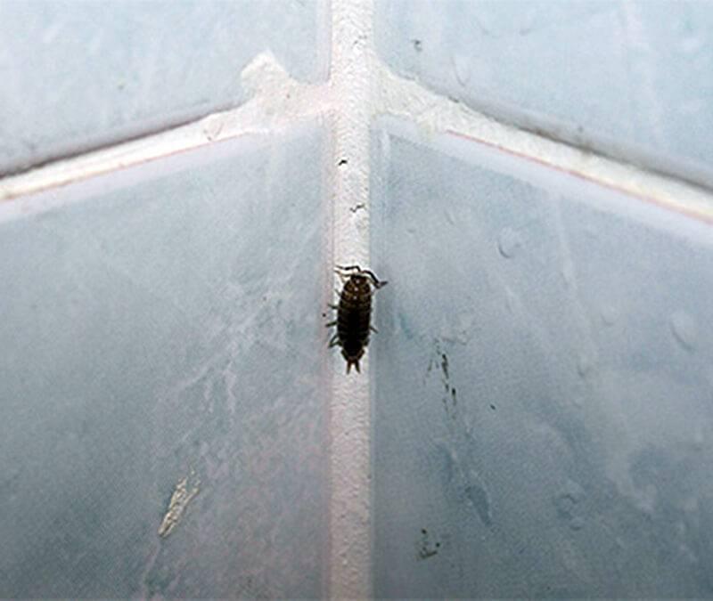 Какие насекомые могут появиться в ванной комнате?