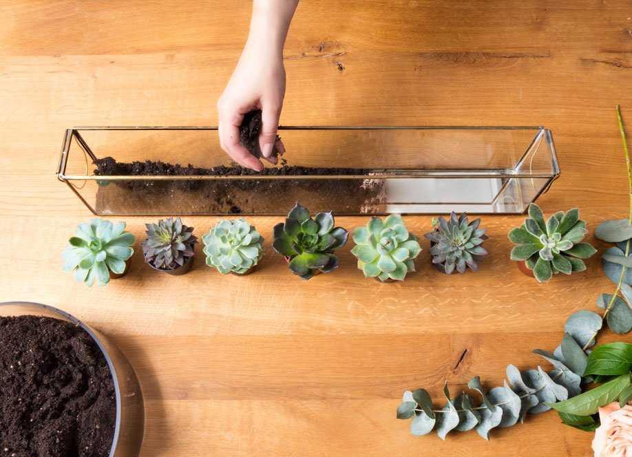 Флорариум своими руками - пошаговая инструкция для начинающих