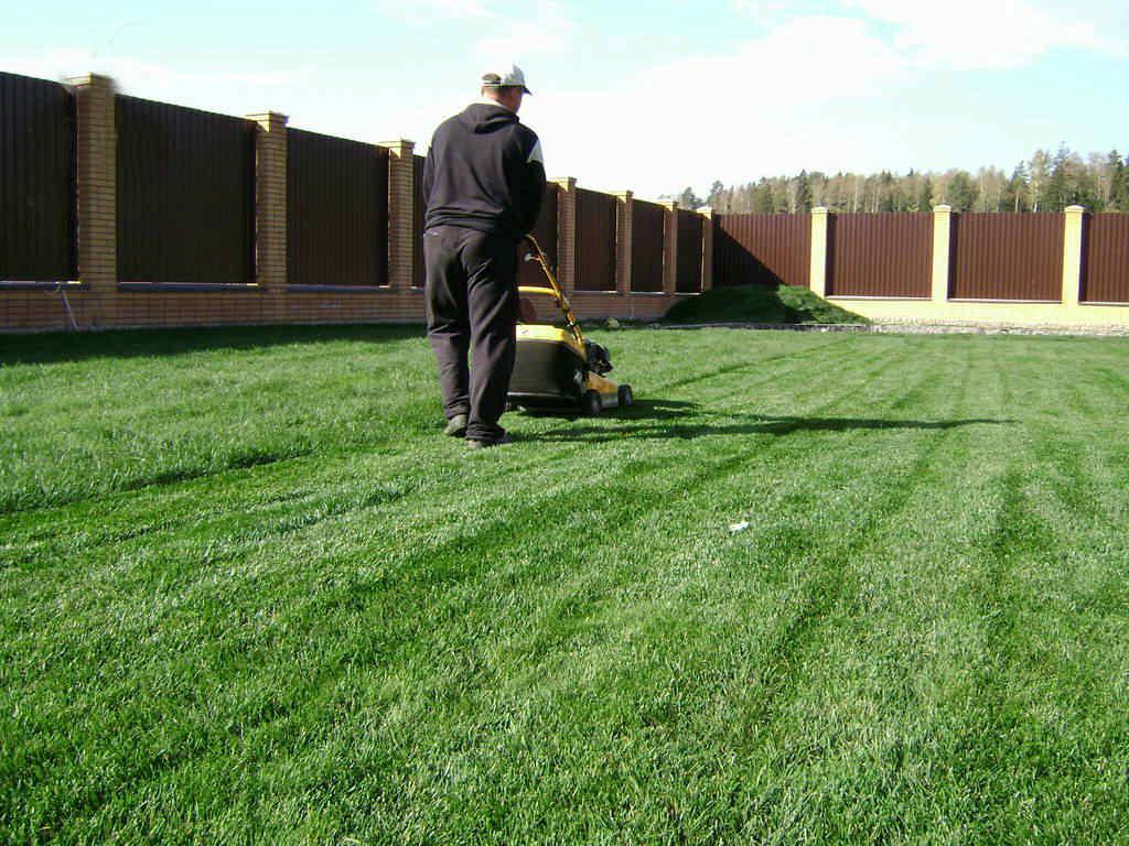 Как посадить газонную траву: виды, правила посадки, уход, советы