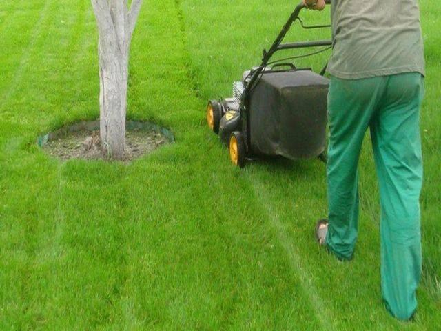 Как ухаживать за газоном: необходимые процедуры и сезонные работы