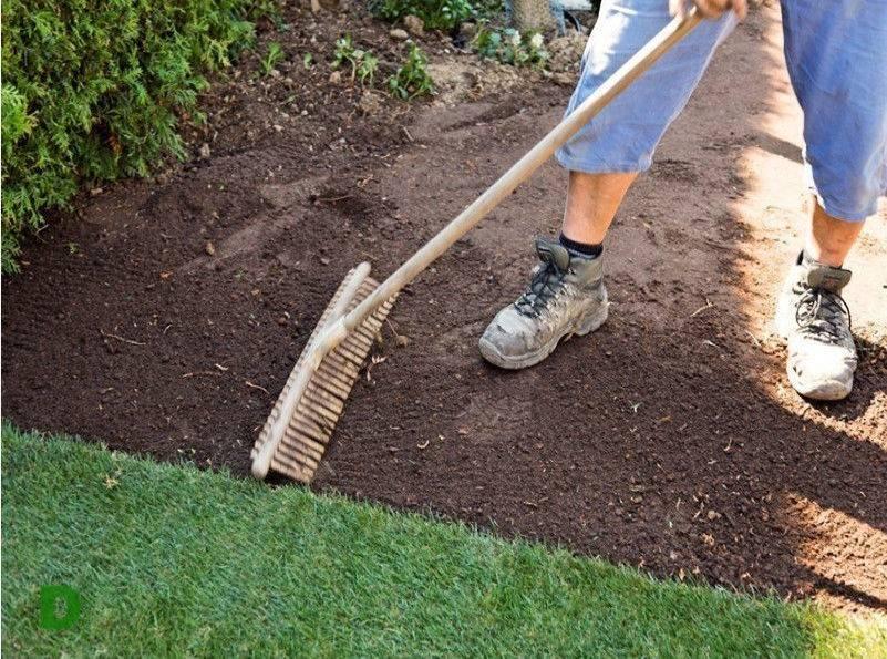 Технология посадки газона своими руками | сажаем сад