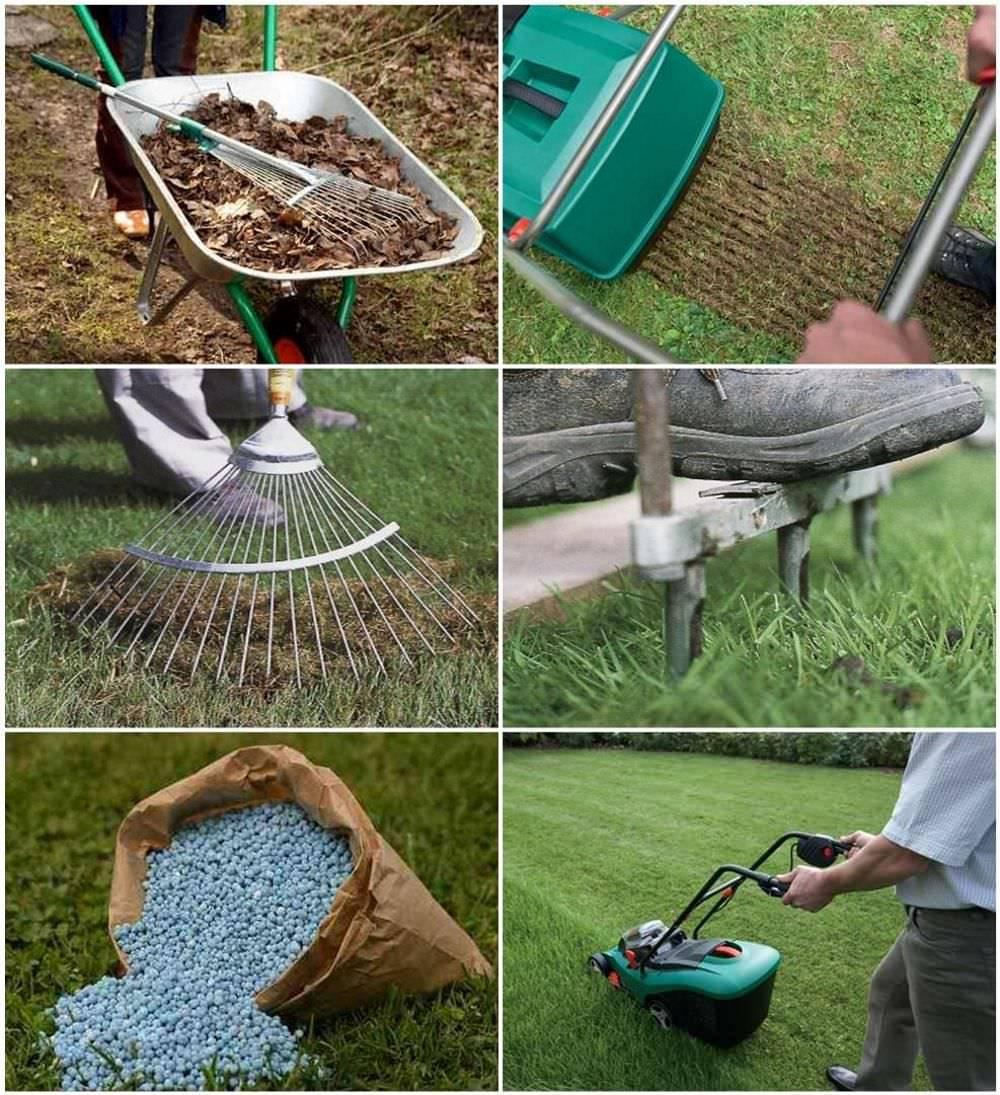 Выращивание, посев и уход за газоном