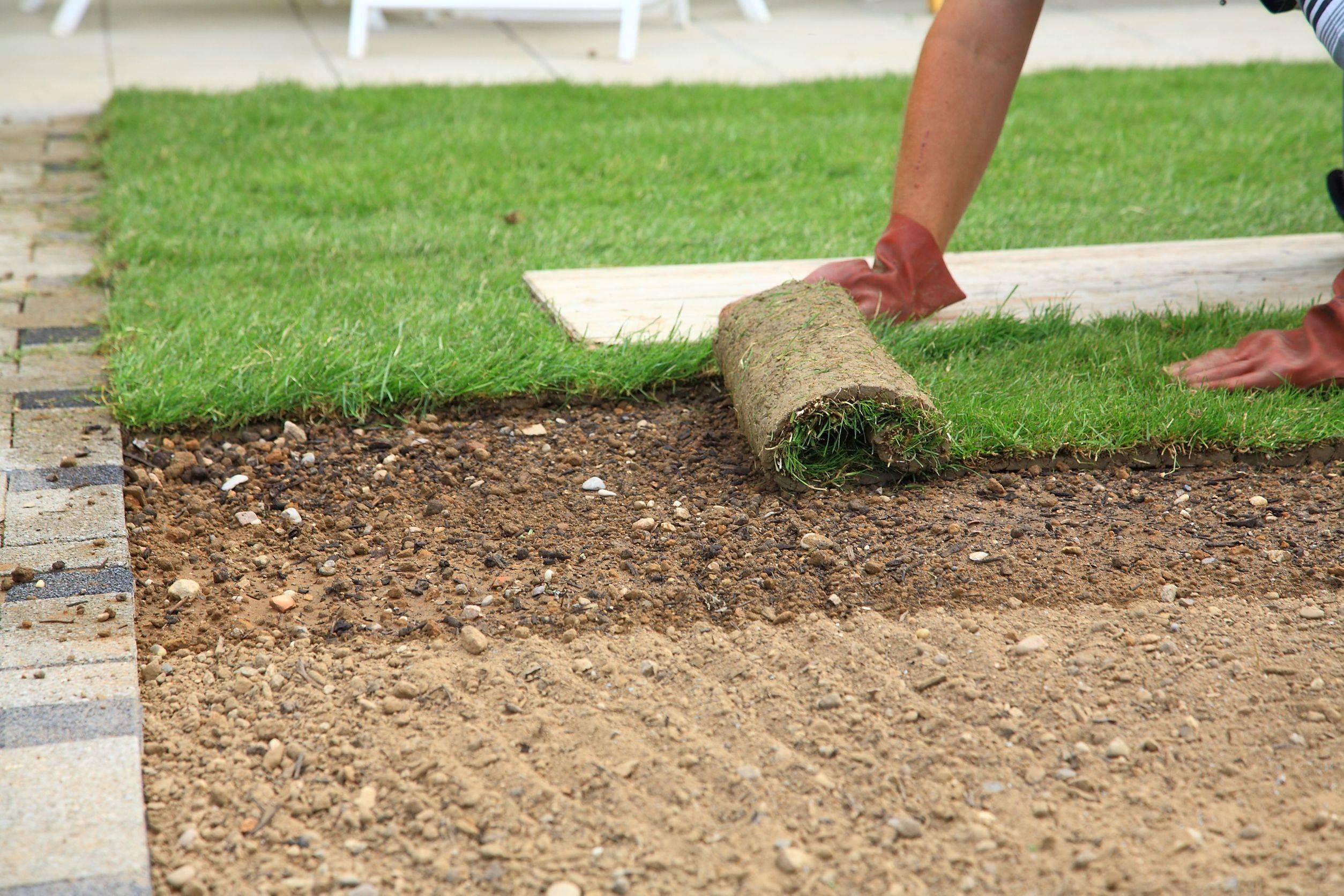 Как ухаживать за газоном на даче – основные этапы по сезонам