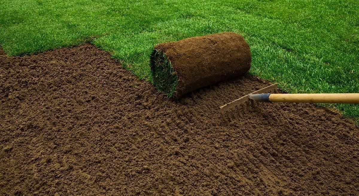 Как правильно посадить газон своими руками