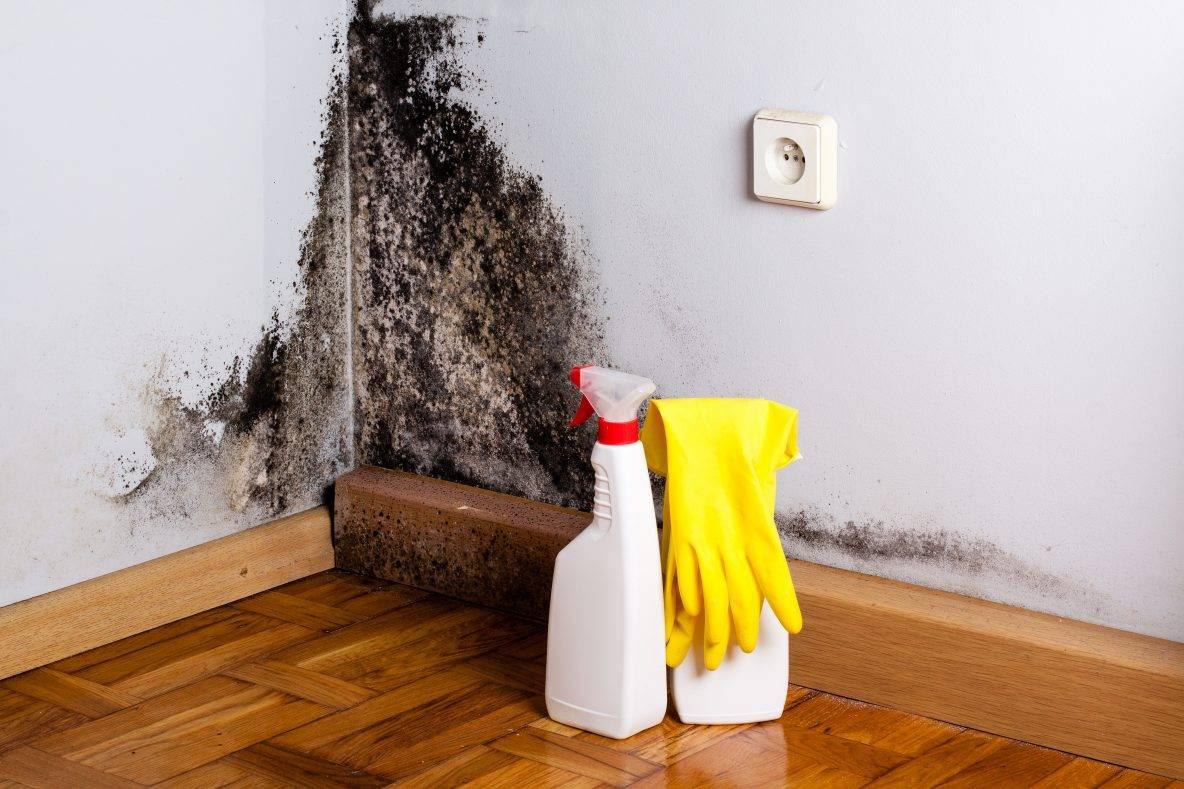 Как самостоятельно вывести и отмыть плесень со стен в своем доме