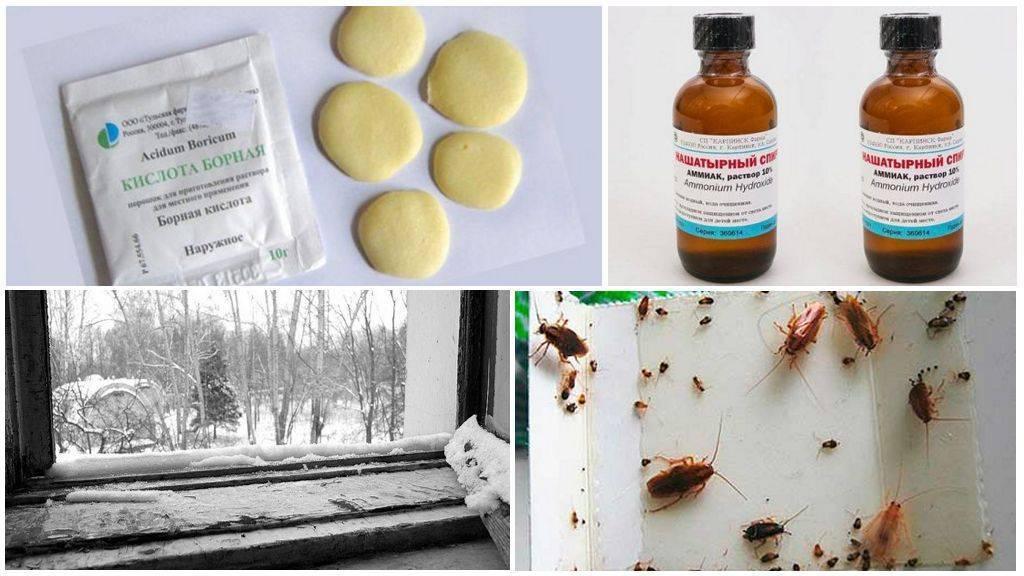 Как избавиться от тараканов в доме и в квартире?