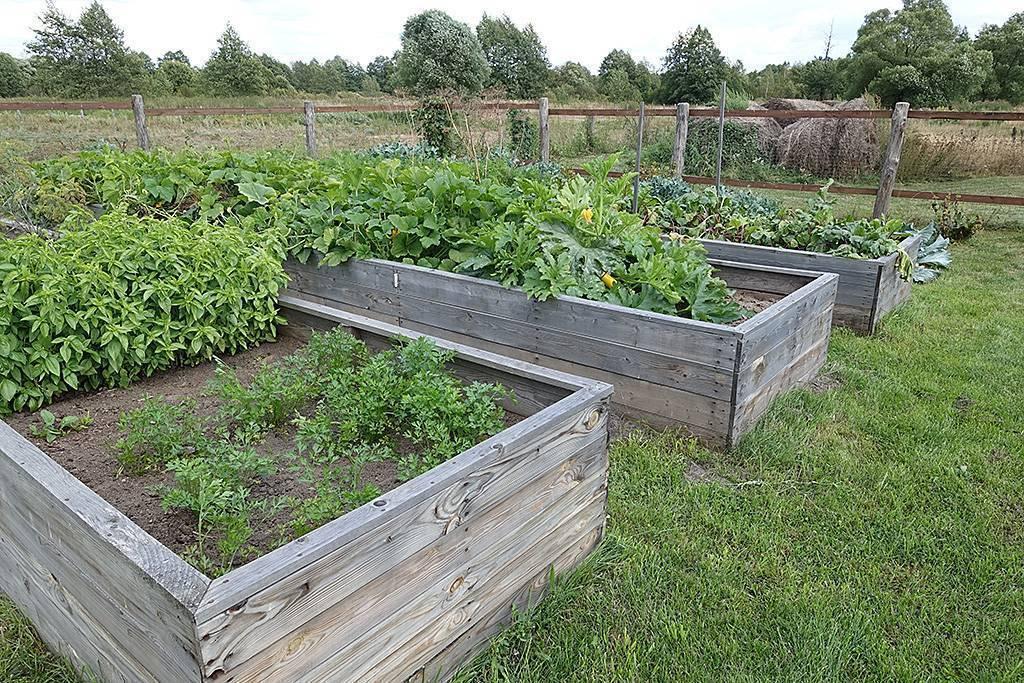 Умный огород или грядки для ленивых