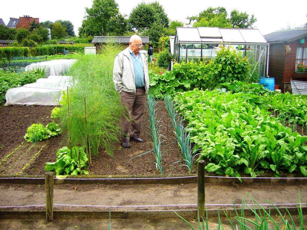 Умный огород или грядки для ленивых дачников