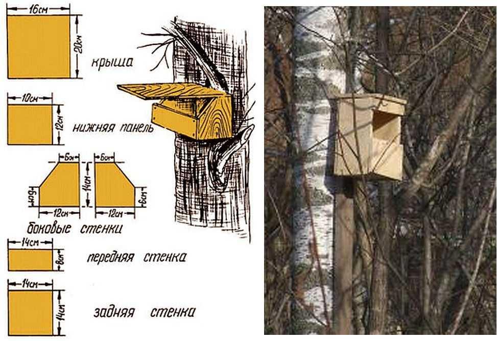 Синичник (24 фото): чертеж и размеры синичника. как сделать домик для синичек из дерева, трубы или пластиковой бутылки? чем отличается от скворечника?