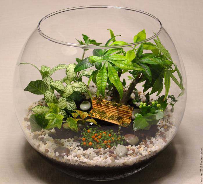 Идеи флорариума - домоводство - медиаплатформа миртесен