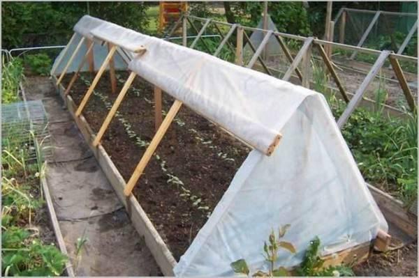 Как в теплице правильно посадить вместе перец, томаты и огурцы (фото): советы – сад и огород своими руками