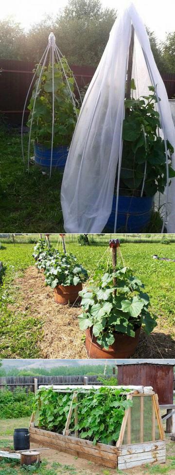 Как высаживать рассаду в теплицу и открытый грунт   на грядке (огород.ru)