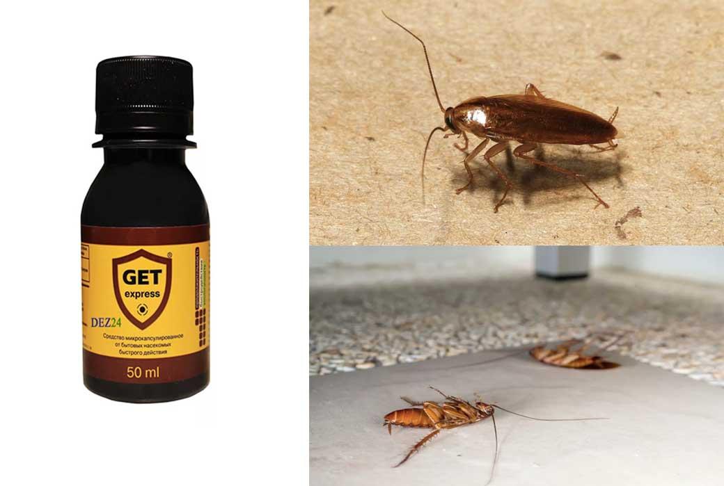 Тараканы в квартире: не беда, подберем самое эффективное средство