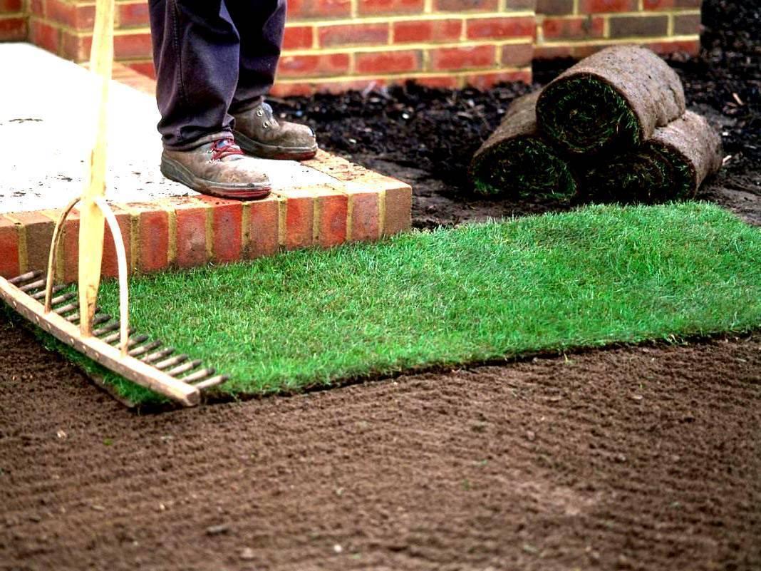 Газонная трава: как сажать, когда сеять, подготовка почвы, технология с пошаговой инструкцией