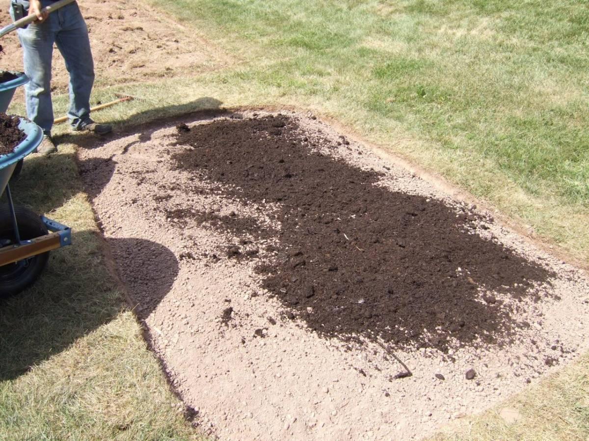 Как посеять газонную траву своими руками: важные правила посадки, особенности и характеристика газонной травы